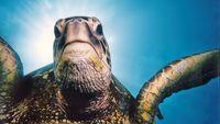 Main_turtle_16
